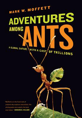 Adventures Among Ants: A Global Safari with a Cast of Trillions - Moffett, Mark W