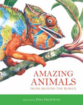 Amazing Animals - Scott, Peter