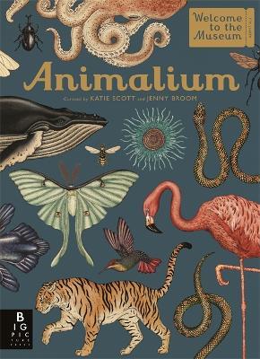 Animalium - Broom, Jenny
