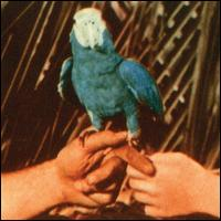 Are You Serious - Andrew Bird