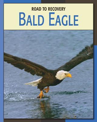 Bald Eagle - Gray, Susan Heinrichs