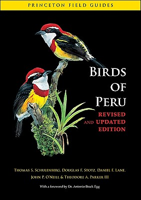 Birds of Peru - Schulenberg, Thomas S, and Stotz, Douglas F, and Lane, Daniel F