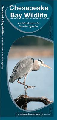 Chesapeake Bay Wildlife - Kavanagh, James, and Kavanagh, J M, and Chesapeake Conservancy (Contributions by)