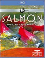 Nature: Salmon - Running the Gauntlet [Blu-ray]