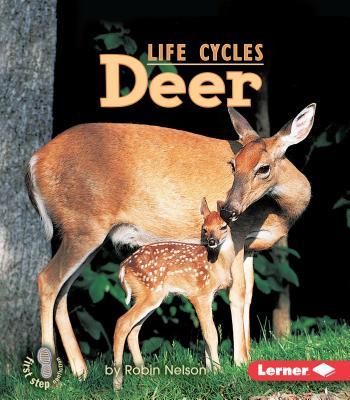 Deer - Nelson, Robin