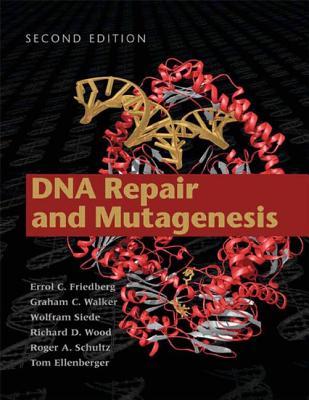 DNA Repair and Mutagenesis - Friedberg, Errol C (Editor), and Walker, Graham C (Editor), and Siede, Wolfram (Editor)
