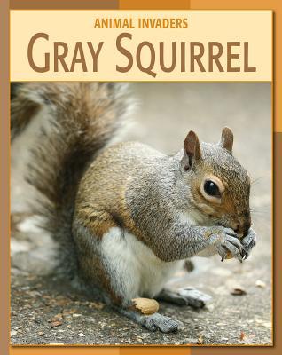 Gray Squirrel - Somervill, Barbara A