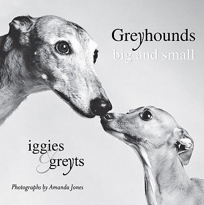 Greyhounds Big and Small: Iggies and Greyts - Jones, Amanda