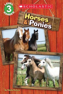 Horses and Ponies - Perkins, Sheila