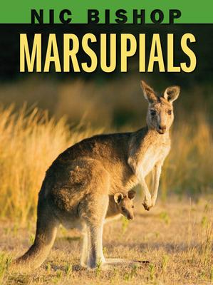 Nic Bishop: Marsupials - Bishop, Nic