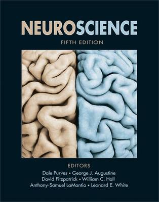 Neuroscience - PURVES, and AUGUSTINE, and FITZPATRICK