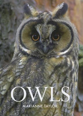 Owls - Taylor, Marianne
