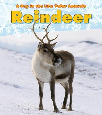 Reindeer - Marsico, Katie