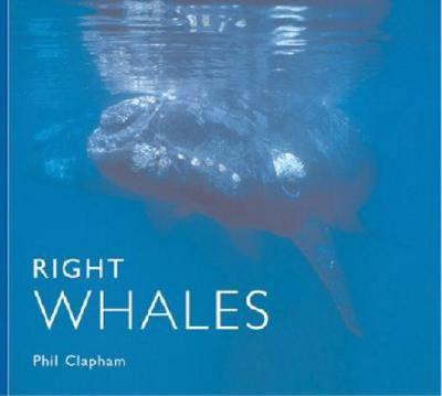 Right Whales - Clapham, Phil