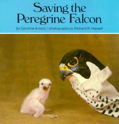 Saving the Peregrine Falcon - Arnold, Caroline