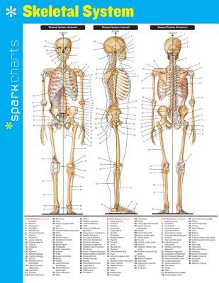 Skeletal System SparkCharts - SparkNotes