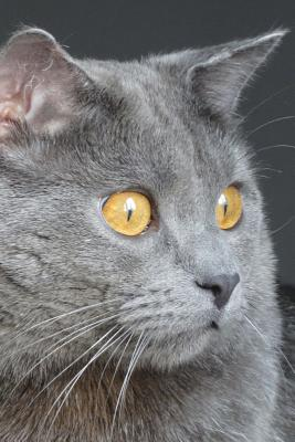 """The Chartreux Cat Journal """"there's That Infernal Red Dot Again!"""": 150 Page Lined Notebook/Diary - Breeds, Cat"""