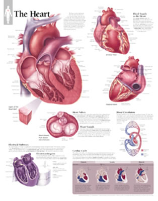 The Heart Chart - Scientific Publishing, and Various