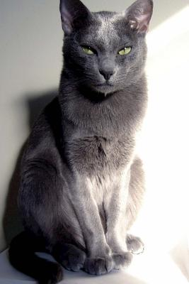 "The Korat Cat Journal ""go Change My Litter Box. Now."": 150 Page Lined Notebook/Diary - Breeds, Cat"