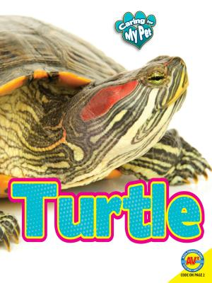 Turtle - Hamilton, Lynn