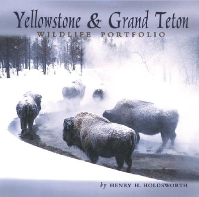 Yellowstone & Grand Teton Wildlife - Holdsworth, Henry H